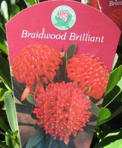 Braidwood brilliant