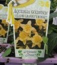 ExShrub Aquilegia goldfinch