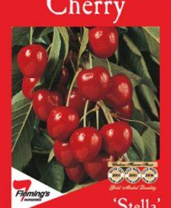 FruitNut_Cherrystella