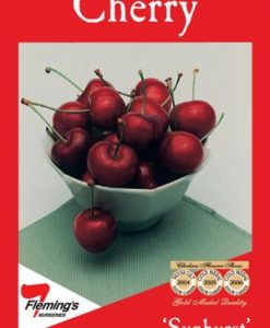 FruitNut_Cherrysunburst