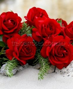 BR Rose_Gallipoli